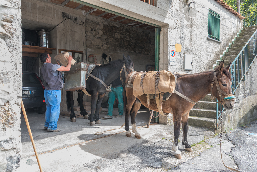 A man is loading up one of the mules for yet another vertical trip.