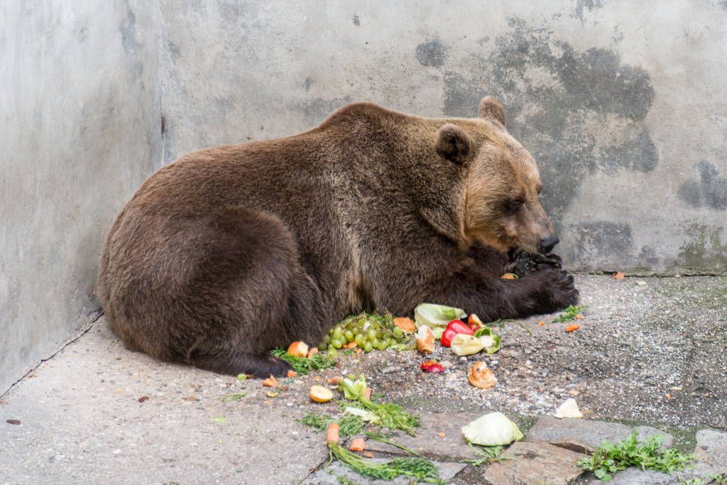 One of two European bears living in pens that flank the entrance to the palace.