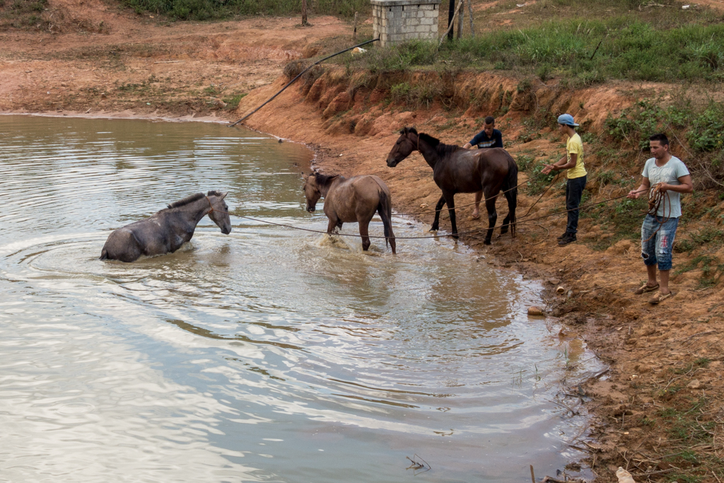 Horses get a bath and a rubdown at the end of the day.